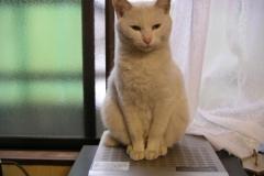 cat_ap1
