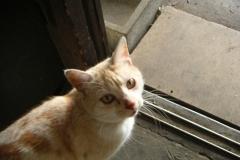 cat_ap3
