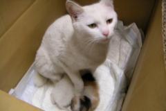 cat_ap5